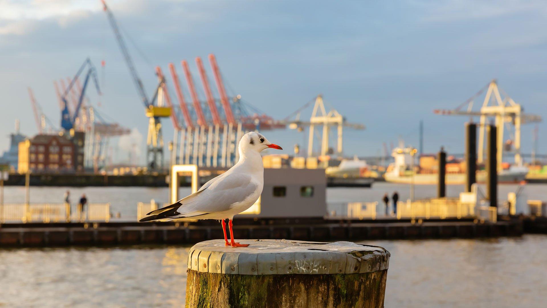 Möwe auf einem Hafenpoller vor dem Seehafen in Hamburg